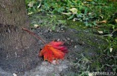 Чэнъюй №11: вернуться домой, когда опадают листья